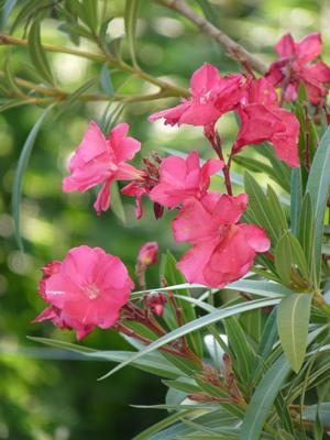les plantes toxiques en omois